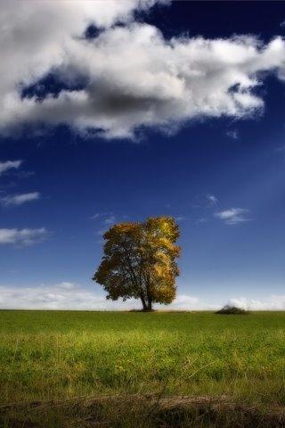scenic-tree.jpg